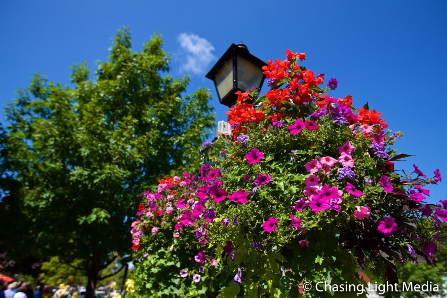Blooming flowers in downtown Niagara-on-the-Lake