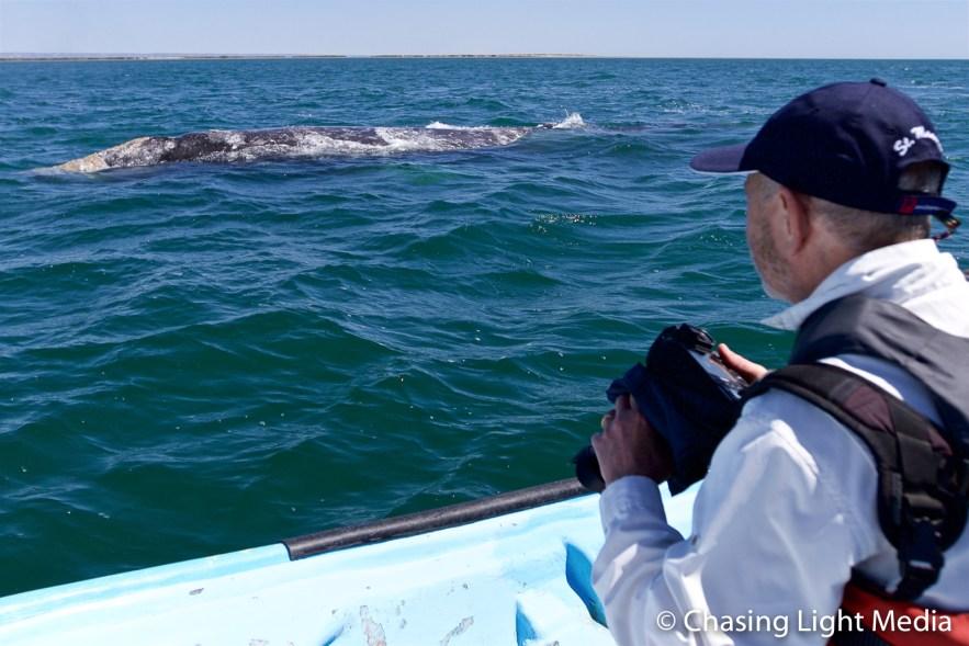 Greg Hull with grey whales at Laguna San Ignacio, Mexico