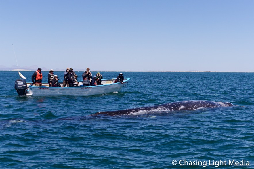Searcher whale watching group in Kuyima panga