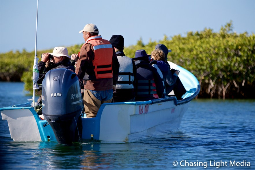Searcher group birdwatching in the mangroves of Laguna San Ignacio