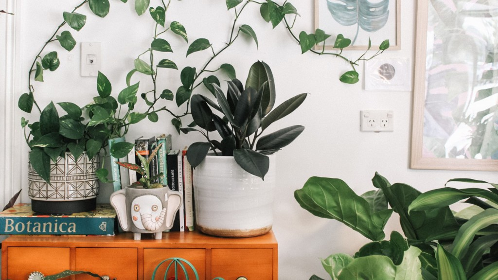 List of Plants That Like Coffee Ground