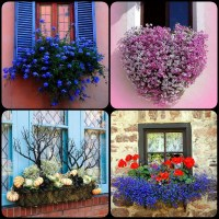 8 Beautiful Window Box Planter Ideas