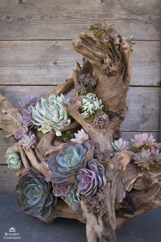 25 Indoor Succulent DIY Project Ideas Page 3 Of 4