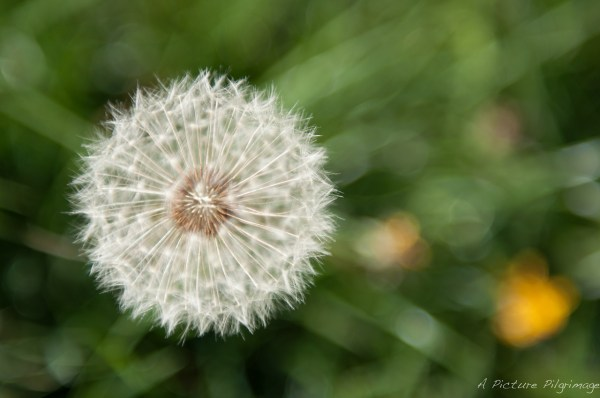 Some Magnificent Collection of Macro Photography (36)
