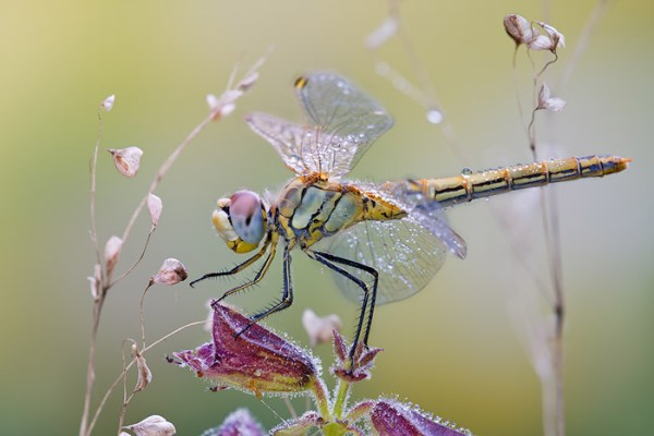 Some Magnificent Collection of Macro Photography (19)