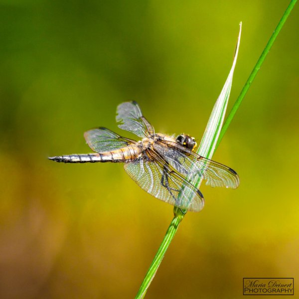 Some Magnificent Collection of Macro Photography (18)
