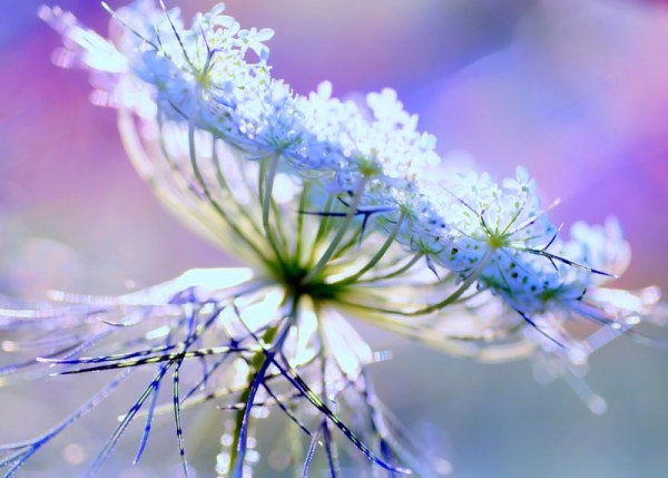 Some Magnificent Collection of Macro Photography (17)
