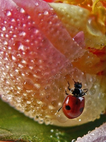 Some Magnificent Collection of Macro Photography (5)