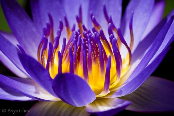 Some Magnificent Collection of Macro Photography (4)