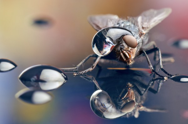 Some Magnificent Collection of Macro Photography (30)