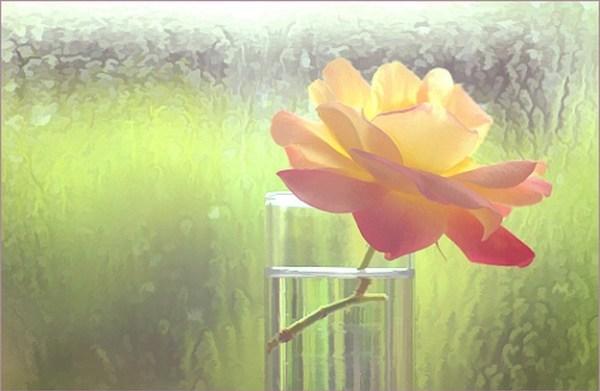 Rose Macro1