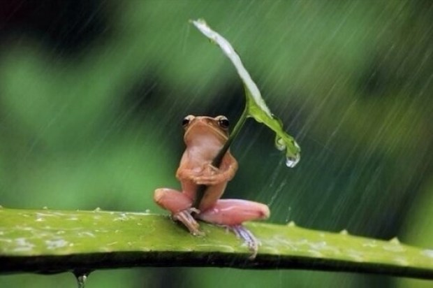 Just a frog using a leaf as an umbrella