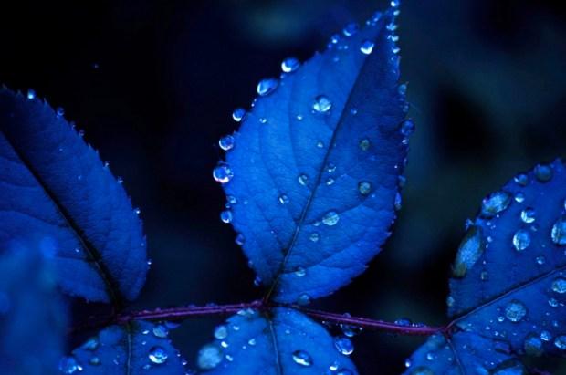 Beautiful blue water drop alignment