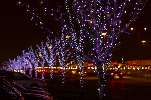 Infinit Christmas trees