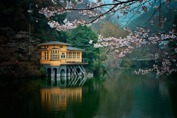 Lakeside with blossoms