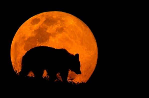 The Bear & The Moon