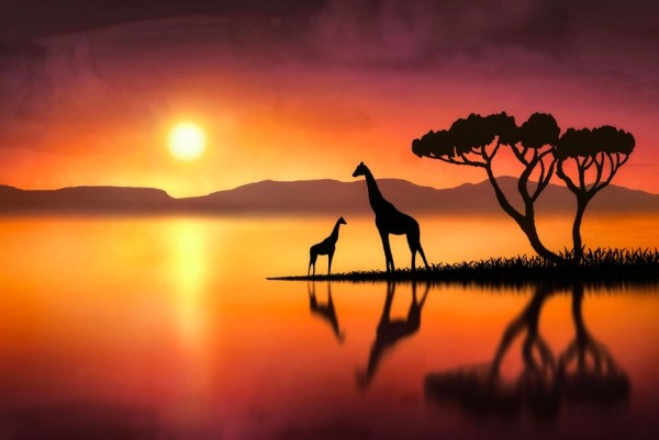 The Giraffes at Sunset