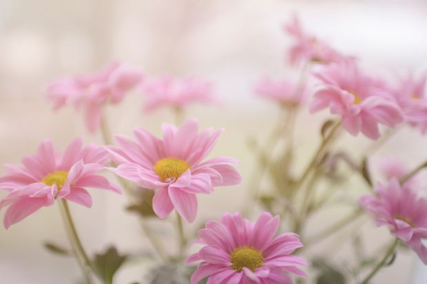 Group of pink flowers