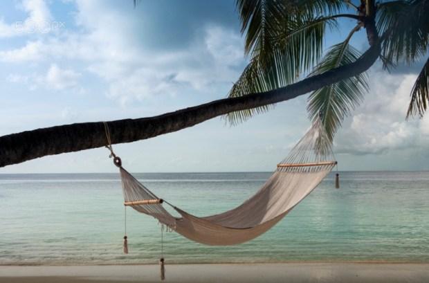 Hammock hanging on palm tree a
