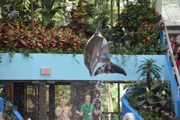 Brookfield Zoo Dolphin Show 072