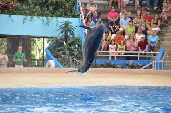 Brookfield Zoo Dolphin Show 078