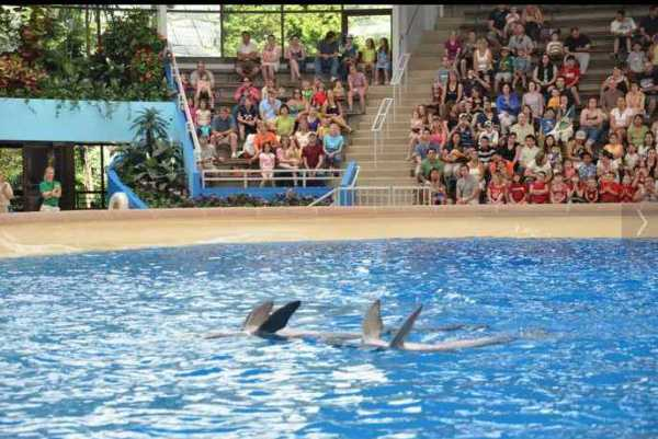 Brookfield Zoo Dolphin Show 096