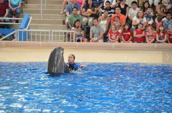 Brookfield Zoo Dolphin Show 098