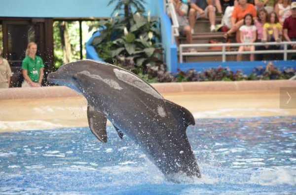 Brookfield Zoo Dolphin Show 103
