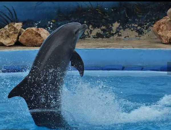 The dolphin display at Mediterraneo Bio Park