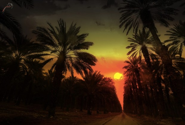 Sunset Ein Gedi