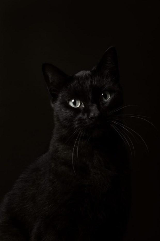 Master Cat