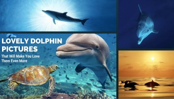Lovely Dolphin Pictures