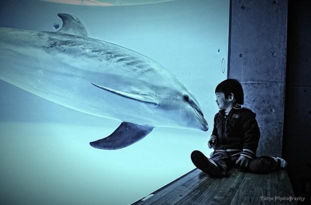 Nice to meet you Dolphin