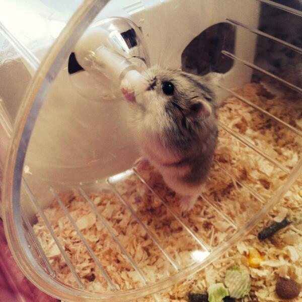 Hamster 6