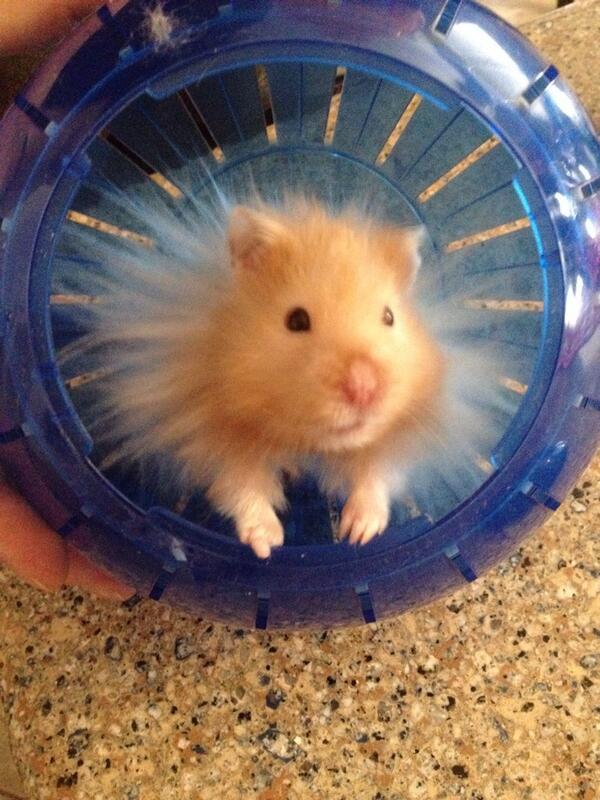 Hamster 7