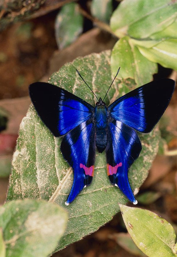 Butterfly Pictures12