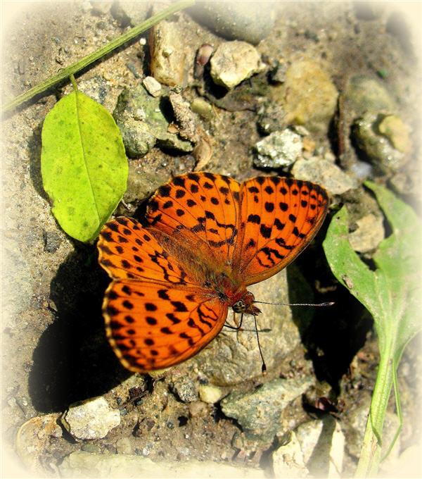 Butterfly tattoo10