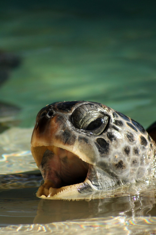Pictures of Turtles9