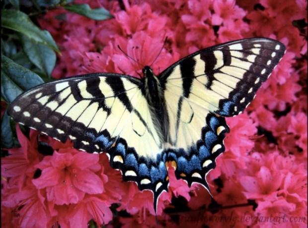 Butterfly with stunning colors
