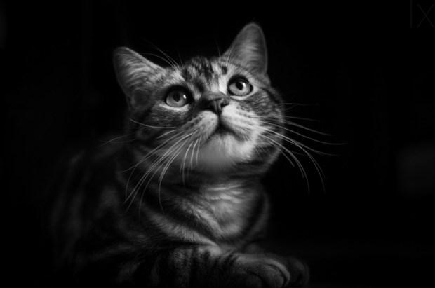 Huzi the cat