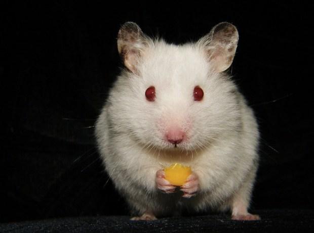 John the hamster
