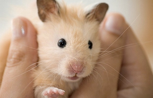 Our Hamster Remy