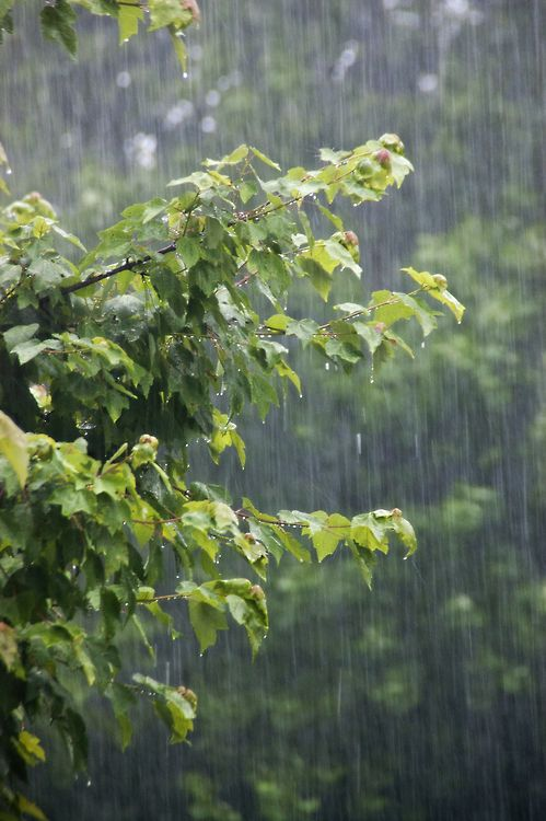 Rain photography 4