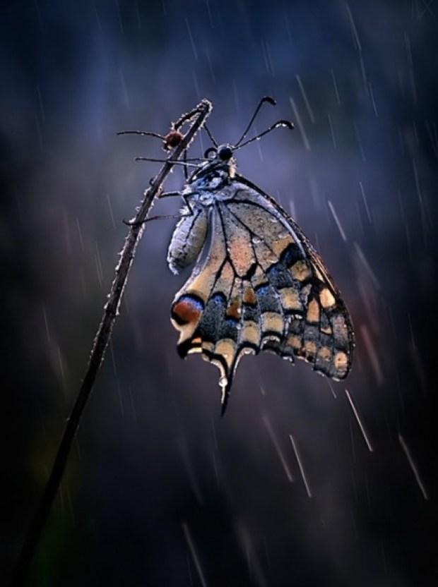 Under the summer rain