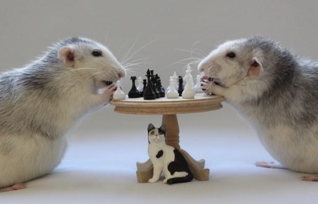 Playing Chess!