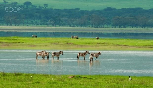 national park, tanzania