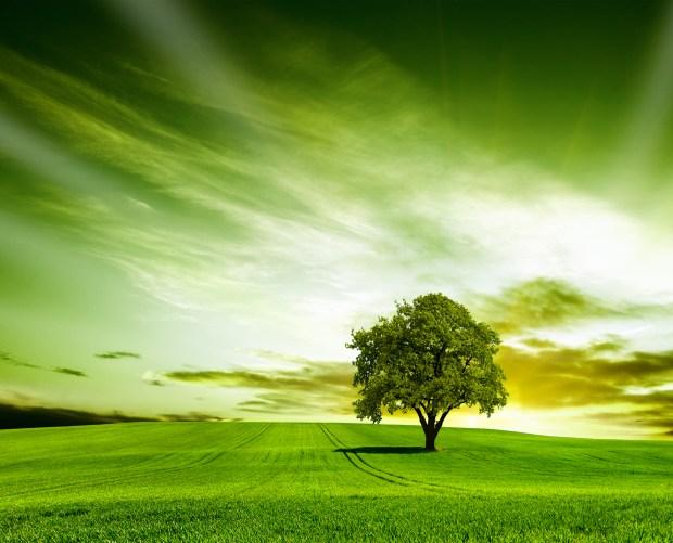 Beautiful Green Nature Wallpaper