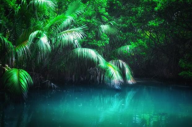 Fantasy Jungle Landscape in Mangrove rain forest | Nature Wallpaper