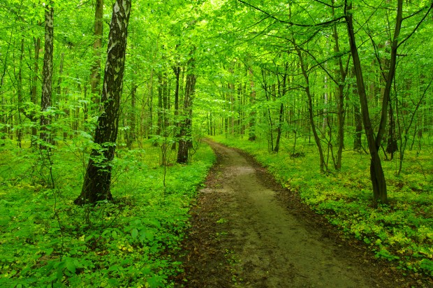 Green Forest and the path - Nature Wallpaper