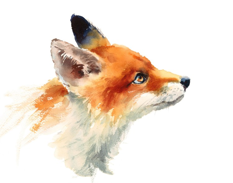 Watercolor Wild Animal Red Fox Looking Up Side View Hand Drawn Portrait